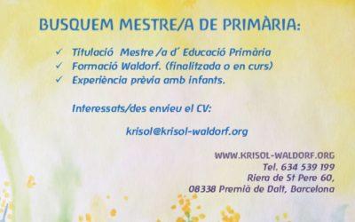 Busquem mestre/a de primària
